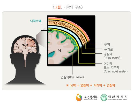 뇌막의구조